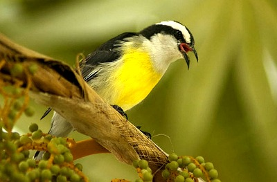 Since the island is wild bird preserve, you'll notice many interesting birds while walking on the beach.
