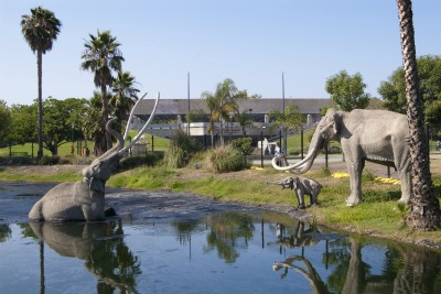 The tar pits at Rancho La Brea.
