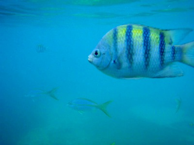 CocoCay is a great place for snorkeling. You can see a lot of beautiful fish in the ocean.