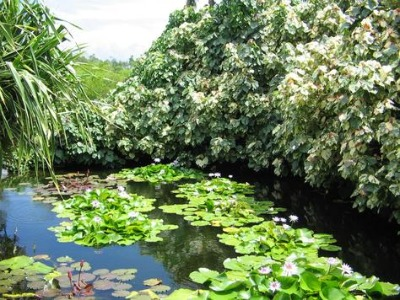 You will enjoy many beautiful moments in Queen Elizabeth II Botanic Park.