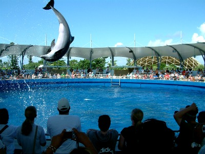 You should visit Miami Seaquarium if you get a chance.